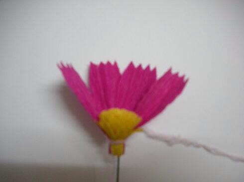 皱纹纸波斯菊制作方法 第6步