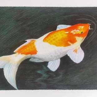 【彩铅画】年年有鱼